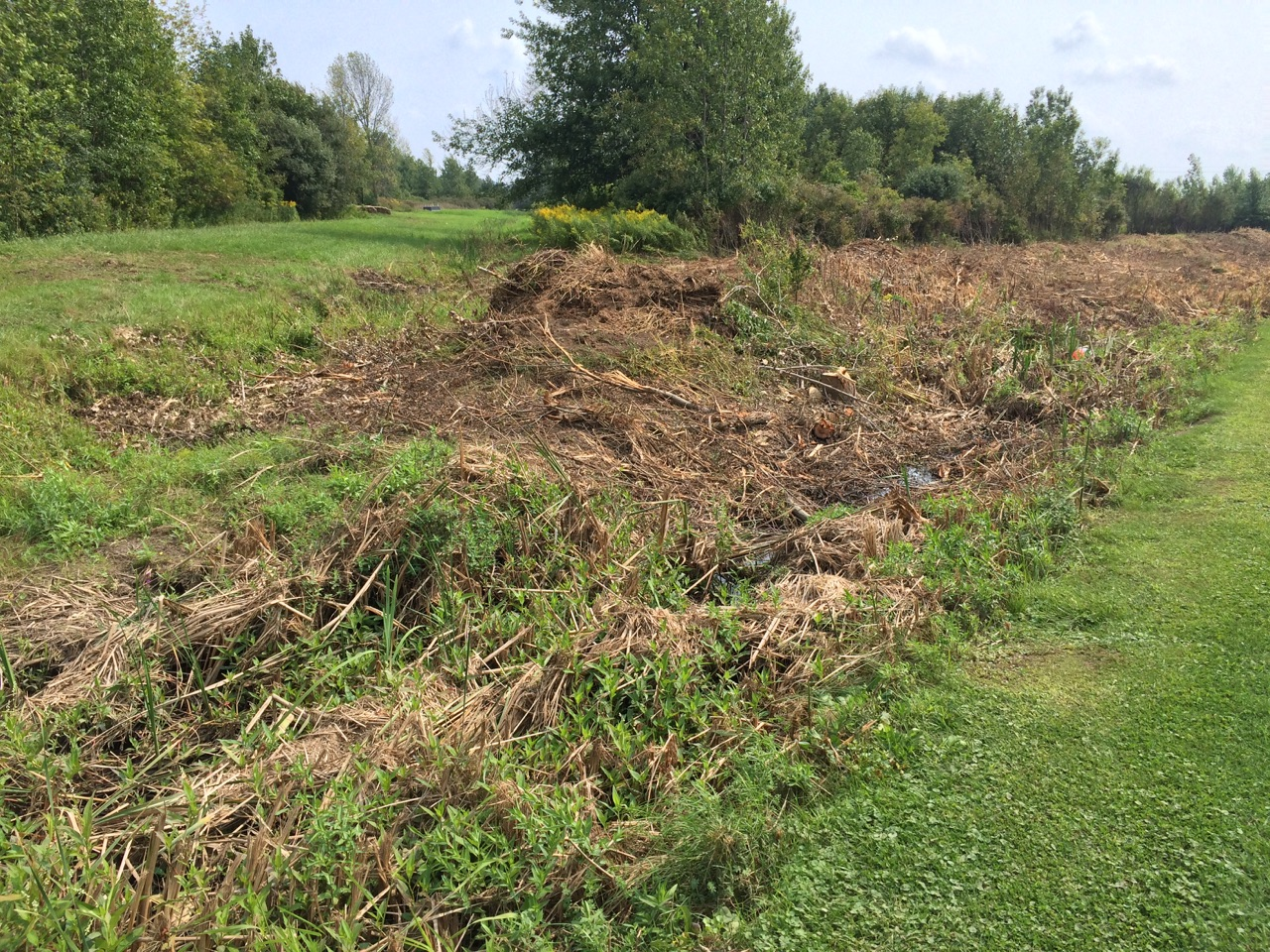 ClarenceDitch_171066