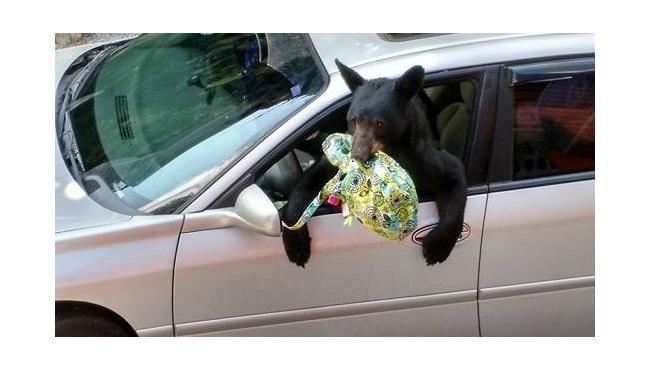 bears_171583