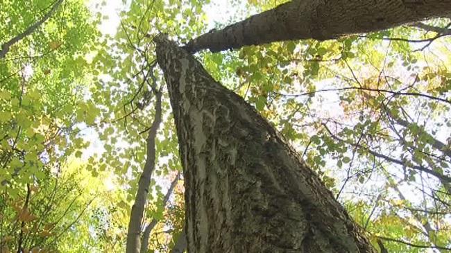 Tree_193392