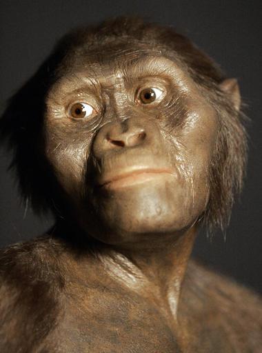 Lucy, Australopithecus afarensis_303704