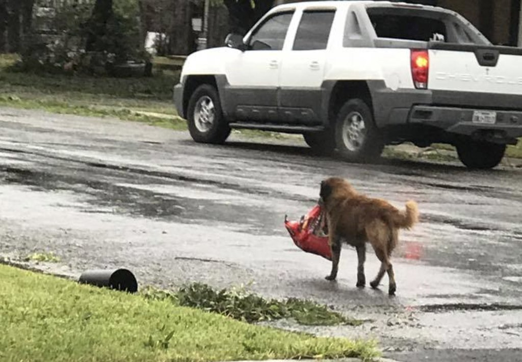 resourceful dog_453501