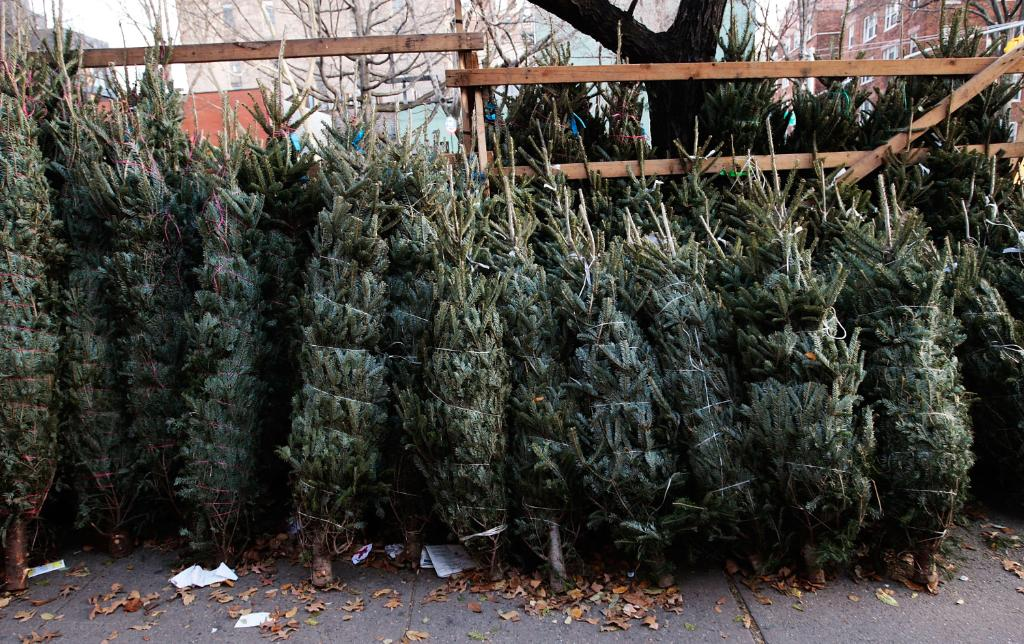 How Much Do Real Christmas Trees Cost.Why Your Christmas Tree May Cost More This Year