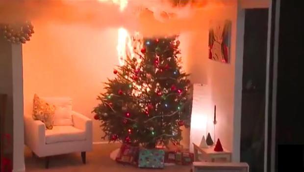 tree-fire_513573