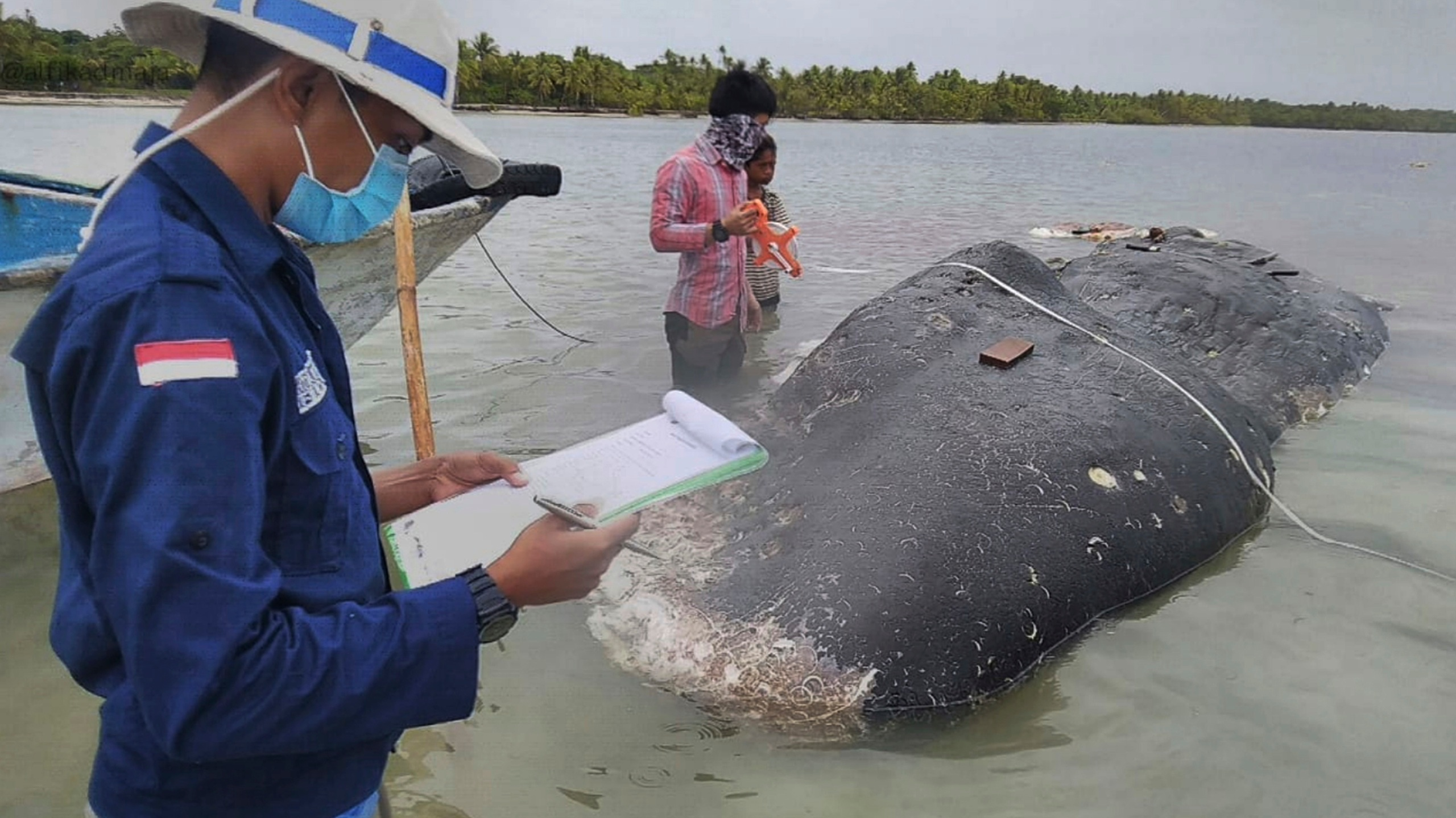 Indonesia Beached Whale_1542802620526