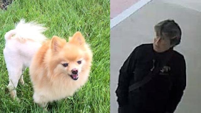 stolen service dog_1541179158008.png_61000584_ver1.0_640_360_1541186347312.jpg.jpg