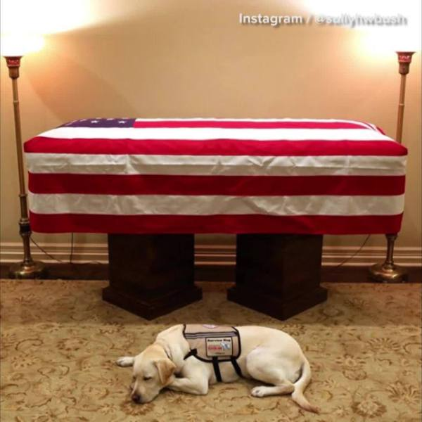 Sully sits by casket