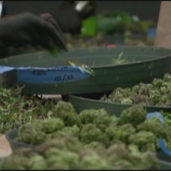 Recreational_marijuana_legalization_0_20190103225415