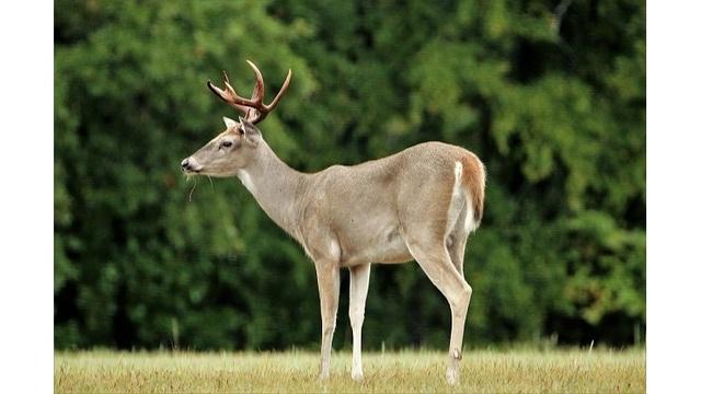 deer_1547866519961.jpg