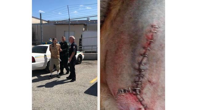 Brevard County groomer arrest_1551196059035.jpg_74999786_ver1.0_640_360_1551239843372.jpg.jpg