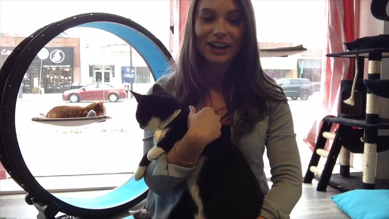 "VIDEO: ""Cats the Musical"" cast meets with real felines at Purrfect Cat Cafe"