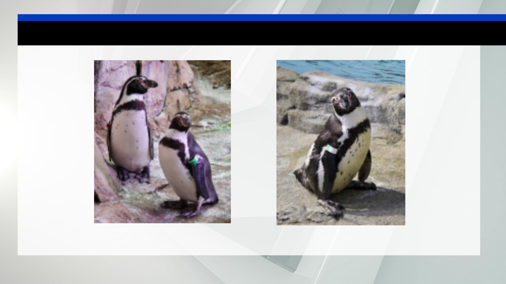 penguins_1552074637164.jpg