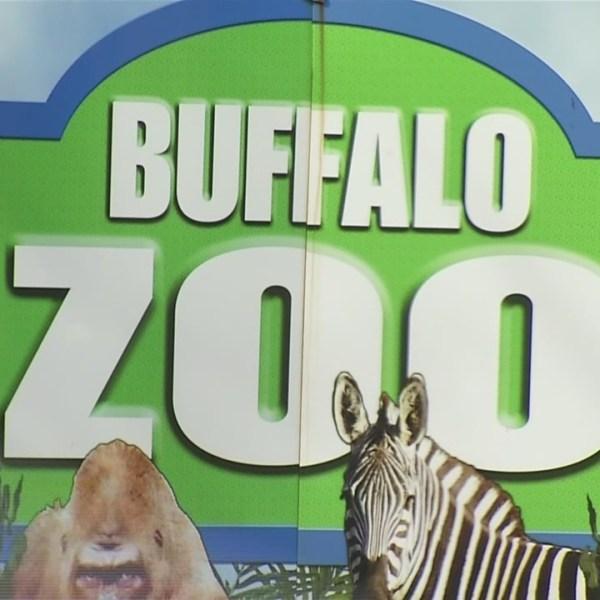 Buffalo_Zoo_0_20190429221821
