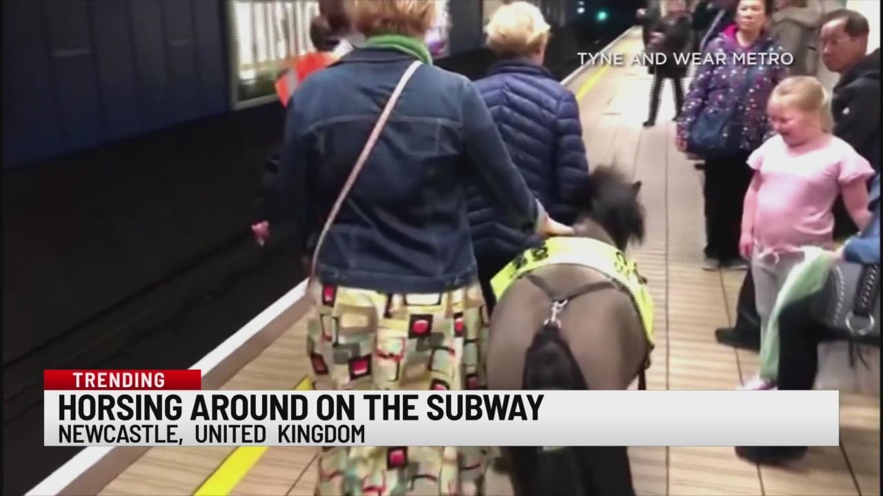 Horsing around on the subway