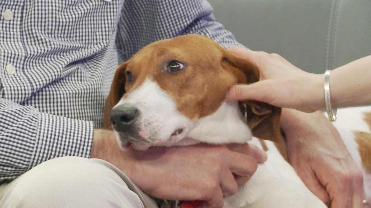 SPCA Monday: Stacie