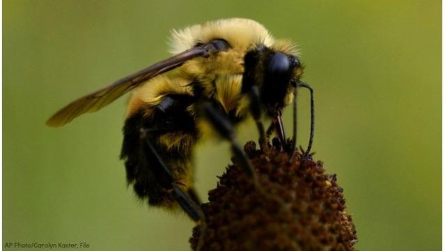 bumblebee-ap-generic_38509165_ver1.0_640_360_1555586693536.jpg