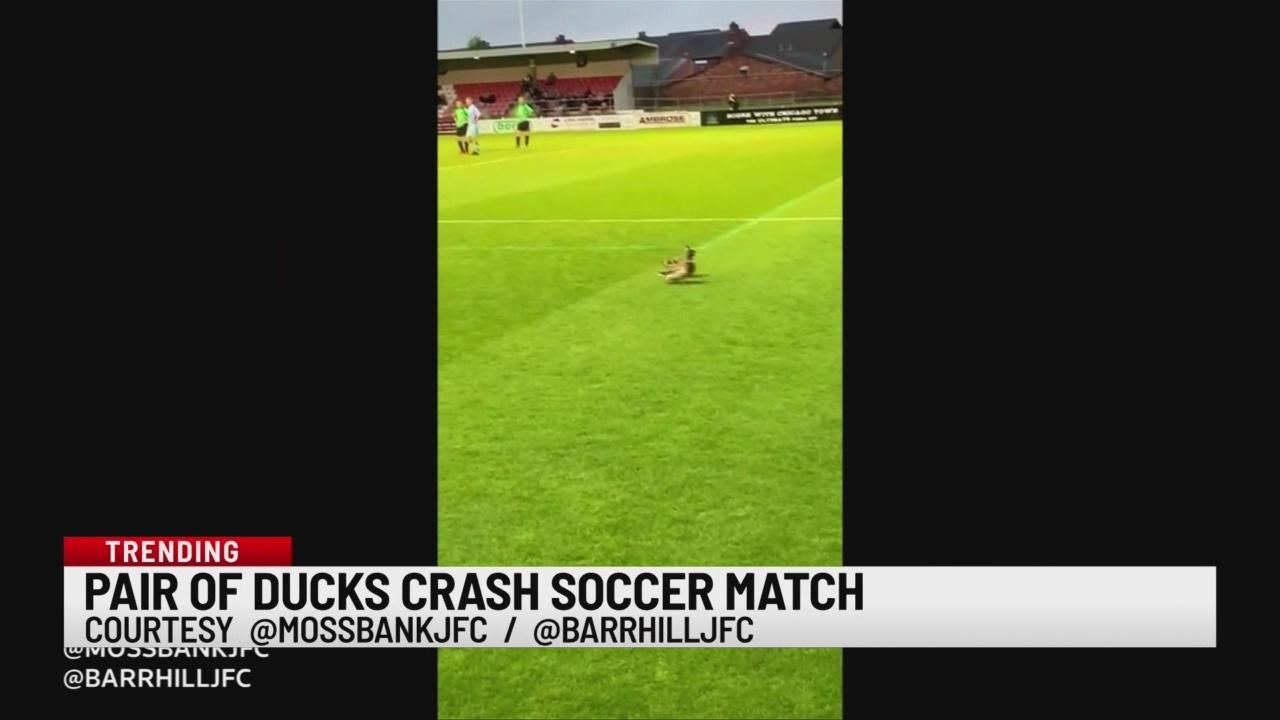 Ducks crash soccer match