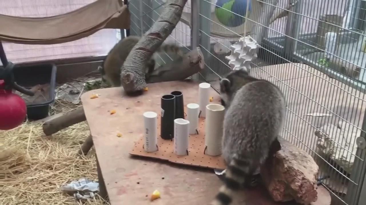 Avoid wild animals to avoid rabies