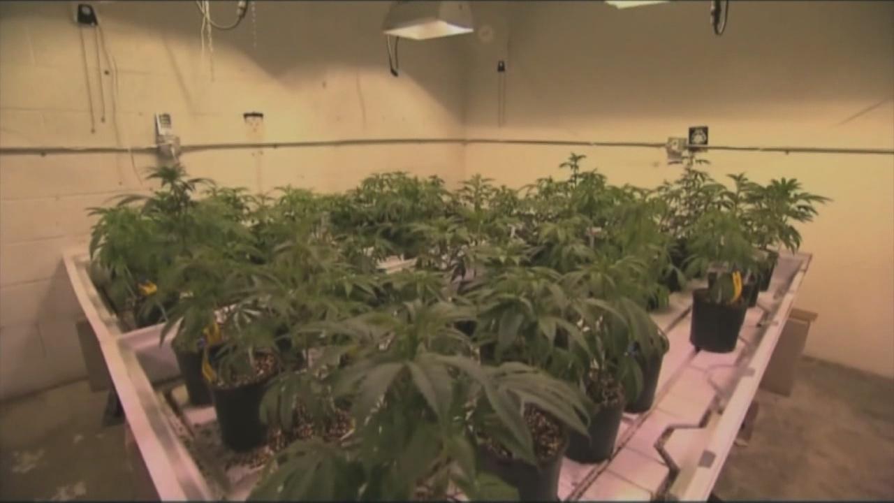 Push for marijuana legalization falls flat in New York
