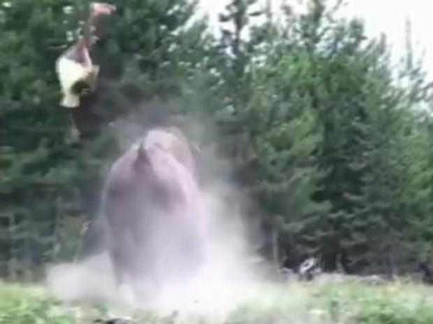 video shows bison tossing girl high in the air at