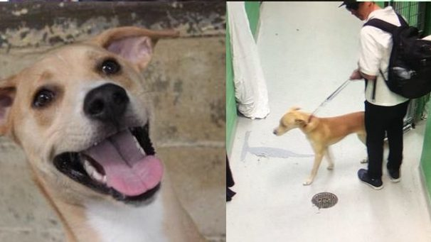 rescue dog stolen from kennel by man kicked out of toronto