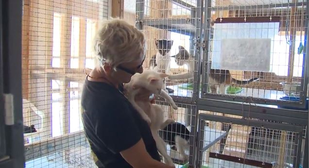 nearly 300 animals killed in shelter in the bahamas during