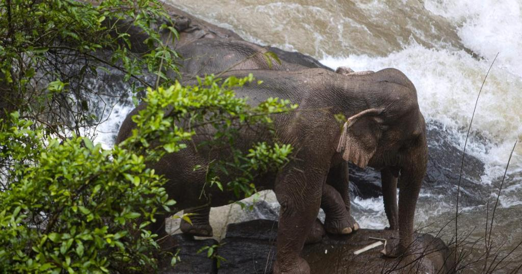 five adult elephants die after falling into waterfall