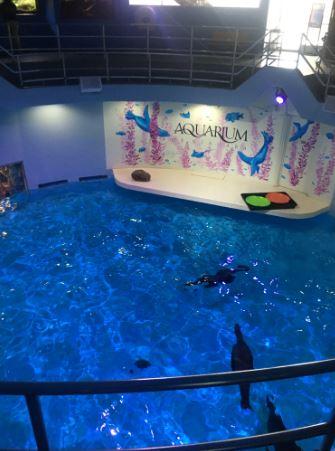 swim into savings  aquarium of niagara offers  7 16