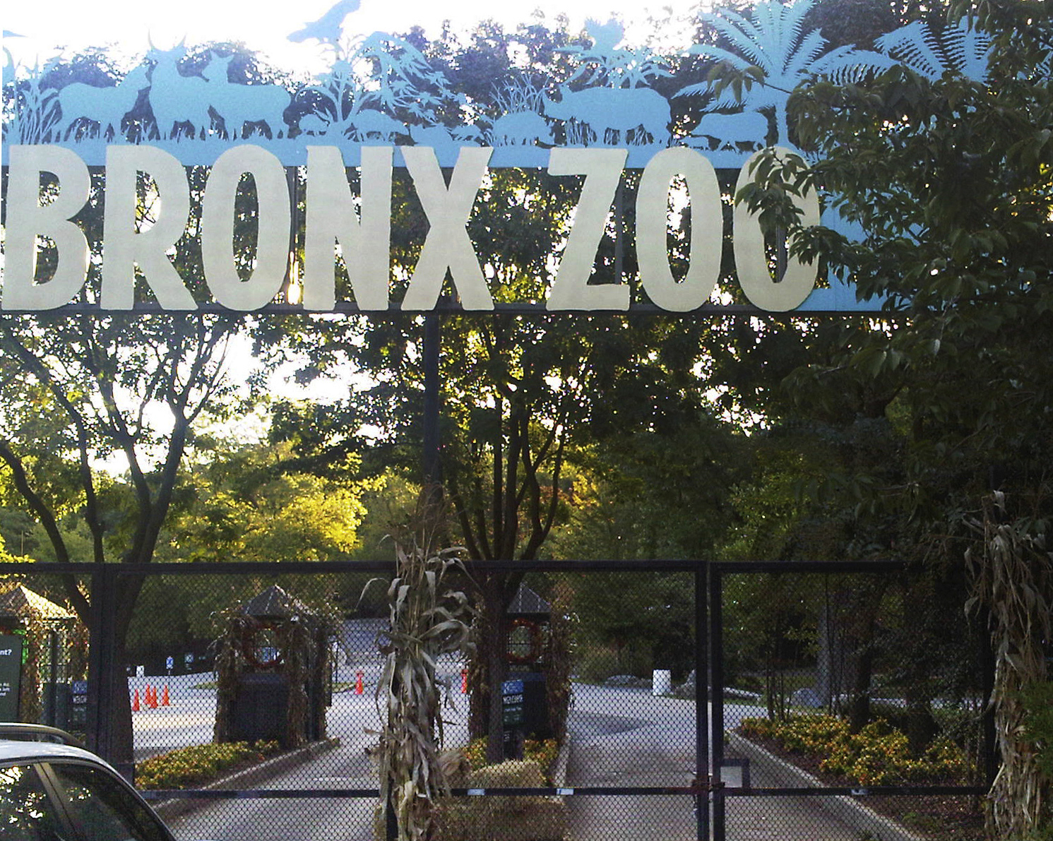 Bronx Zoo Jobs For 17 Year Olds